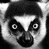 GPell's avatar
