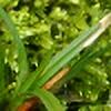 GPuronen's avatar