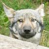 GramDaerwolf's avatar