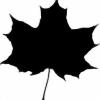 GreenCopperz's avatar