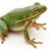 greenleafone7's avatar