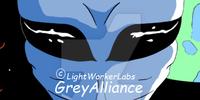 GreyAlliance