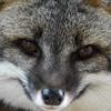 GreyFoxArtworks's avatar