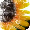 grihmphotography's avatar