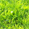 growinglimonade's avatar