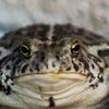 GrubbyEgg's avatar