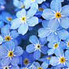 gryfen's avatar