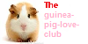 Guinea-pig-loveclub