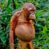 gustavo726's avatar