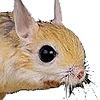 gwathamitez's avatar