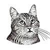 GwilymG's avatar