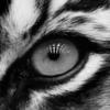 gyursam's avatar
