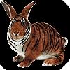 Habadas's avatar