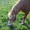 Haffepigen's avatar