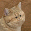 Haitious's avatar