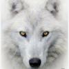 halleestoddart's avatar