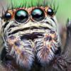 Halogen888's avatar