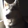 halomoon's avatar
