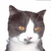 HANSWALTER's avatar