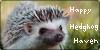 Happy-Hedgehog-Haven