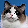 HappyHarbl's avatar