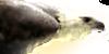 Harpy-Haven's avatar