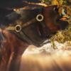 hashi58's avatar