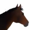 Haventy's avatar