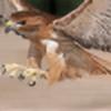 Hawk-74's avatar