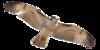 HawkCenter's avatar
