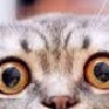 Heathcliff2233's avatar