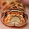 HeatherTelesca's avatar