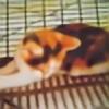 hedgehogshill's avatar