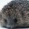 Hedgie-Chan's avatar