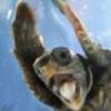 HedgieSage's avatar