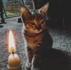 heksa135's avatar