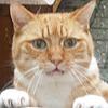 hellercat's avatar