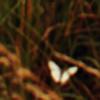 HelzCullen's avatar