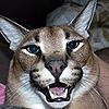 Hemlock2's avatar
