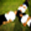 hera-fied's avatar