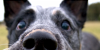 HerdingDogs's avatar