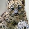 Herninkel's avatar