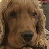 Hi-Steve's avatar