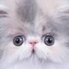 hilcha's avatar