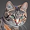 Hippykat13's avatar