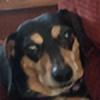 HippySquirrelScetch's avatar