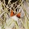 HollyDGF's avatar