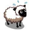 HollySheep's avatar