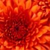 HolySparkle's avatar