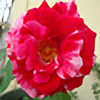 HoneyBlossom3's avatar